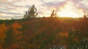 Jesień krajobraz zdjęcie wideo