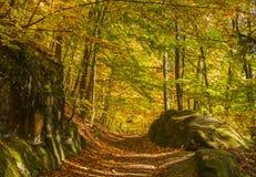 Jesień krajobraz Fotografia Royalty Free
