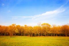 jesień krajobraz Zdjęcia Stock