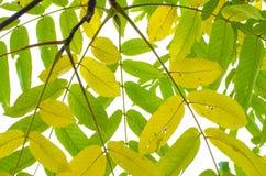 Jesień krajobraz Fotografia Stock