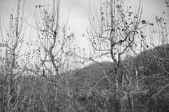 Jesień krajobraz Zdjęcie Stock