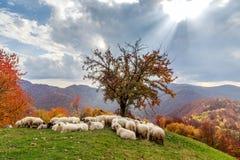 Jesień krajobraz, cakiel, shepard pies Zdjęcie Stock