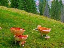 Jesień krajobraz Karpackie góry, ukraine Zdjęcia Royalty Free