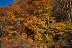 Jesień krajobraz Listopadu park w pogodnej pogodzie Fotografia Royalty Free