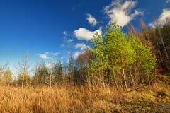 Jesień krajobraz przeciw Fotografia Stock