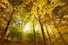 Jesień krajobraz w lesie. Obrazy Stock