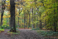 Jesień krajobraz w lesie Montmorency Zdjęcie Stock