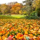 Jesień krajobraz w parku. Fotografia Stock