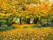 Jesień krajobraz w parku. Zdjęcia Royalty Free