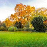 Jesień krajobraz w parku. Zdjęcie Stock