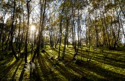 Jesień krajobraz w Staffordshire, Anglia Zdjęcia Royalty Free