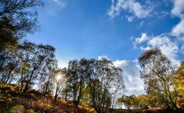 Jesień krajobraz w Staffordshire, Anglia Obraz Royalty Free