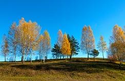 Jesień krajobraz z drzewami Zdjęcia Royalty Free