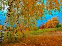 Jesień krajobraz z drzewami Obraz Royalty Free