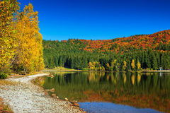 Jesień krajobraz z kolorowym lasem, St Ana jezioro, Transylvania, Rumunia Obrazy Royalty Free