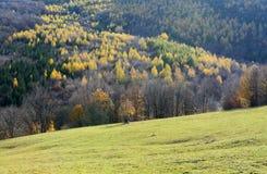Jesień krajobraz z koloru drzewem Fotografia Royalty Free