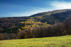 Jesień krajobraz z koloru drzewem Zdjęcie Stock