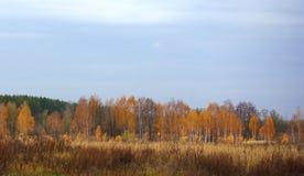 Jesień krajobraz z lasem Fotografia Royalty Free