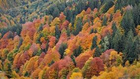Jesień krajobraz z Stubarwnymi drzewami Fotografia Stock