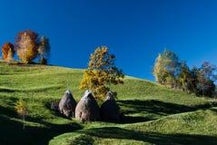 jesień krajobrazowy Romania Obrazy Stock