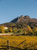 Jesień krajobrazowy winnica Obraz Royalty Free