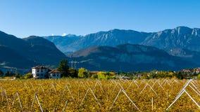 Jesień krajobrazowy winnica Zdjęcia Royalty Free