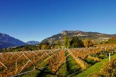 Jesień krajobrazowy winnica Zdjęcia Stock