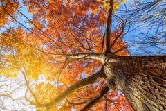 Jesień krajobrazy Obraz Royalty Free