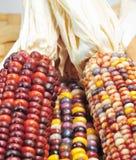 jesień kukurudzy hindus Zdjęcia Stock