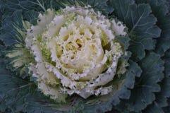 Jesień kwiat Zdjęcia Royalty Free