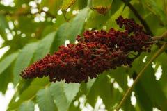 Jesień kwiatu drzewo Fotografia Royalty Free