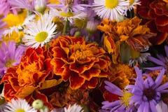 jesień kwiaty Zdjęcie Royalty Free