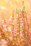Jesień kwiaty Obrazy Royalty Free