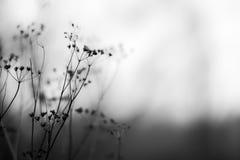 Jesień kwitnie czarny i biały Zdjęcia Royalty Free