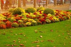 Jesień kwitnie w miasto parku Obrazy Royalty Free