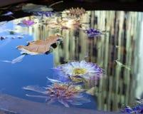 Jesień kwitnie w wodzie Obrazy Stock