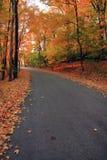 jesień las Fotografia Royalty Free