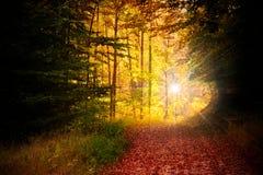 jesień las Obraz Stock