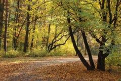 jesień las Zdjęcie Royalty Free