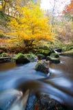 Jesień las Obrazy Stock