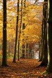 Jesień las - 01 Zdjęcie Royalty Free