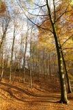Jesień las - 02 Zdjęcia Royalty Free