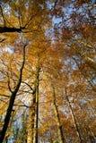 Jesień las - 03 Fotografia Royalty Free