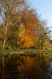 Jesień las - 04 Obrazy Stock