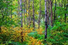 jesień las Zdjęcia Stock