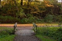 Jesień las, Hamburg, Niemcy Obraz Stock