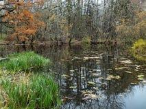 Jesie? las odbijaj?cy w lasowym jeziorze Z?ota jesie? Odbicie niebo w wodzie Ostatni ciepli jesie? dni zdjęcia royalty free