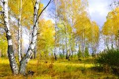 Jesień las. Rosja Obraz Royalty Free