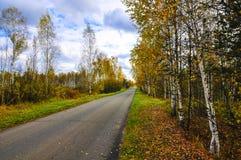 Jesień las. Rosja Obraz Stock