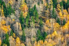 Jesień las Syberia Zdjęcia Stock